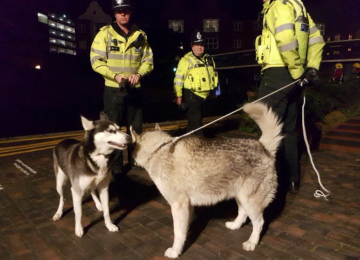 Two dogs rescued from a barge fire near The ICC in the City Centre.