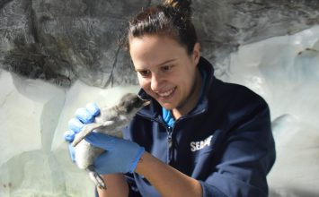 National Sea Life Centre celebrates the arrival of first penguin chick