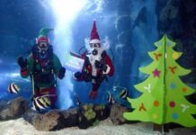 Scuba Santa at National Sea Life Centre