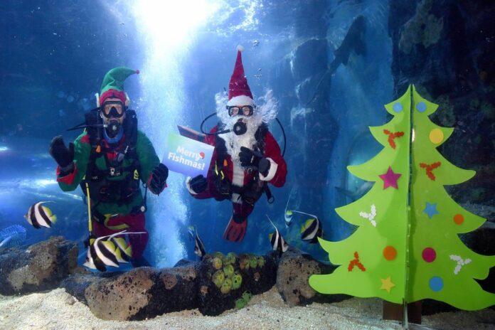 Scuba Santa at National Sea Life Centre
