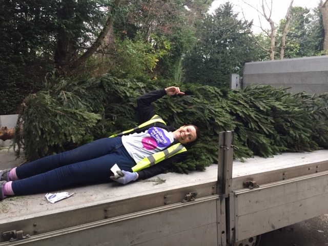 Sue McNally tackles a 20ft Christmas Tree for recycling